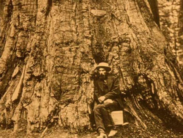 Eadweard Mubridge