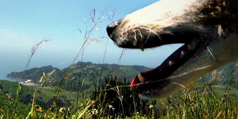 Cena de Coração de cachorro, de Laurie Anderson