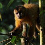 <em>Amazônia</em> ou A dramaturgia da fauna